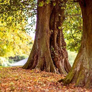 Eternity Tree 1